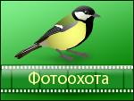 ФОТООХОТА. Сайт Василия ВИШНЕВСКОГО